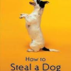 Thumbnail image for HOW TO STEAL A DOG Literature Circle Questions