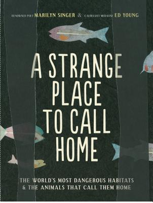 Post image for A  STRANGE  PLACE  TO  CALL  HOME