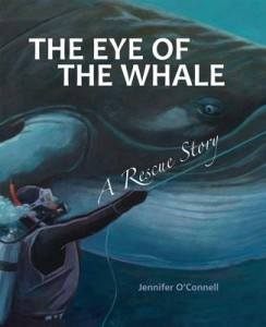 eye of a whale